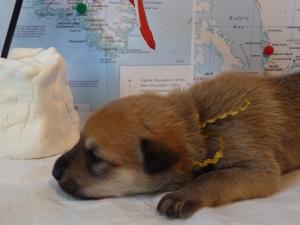 Ilulissat Female 1 lb 11.4 oz