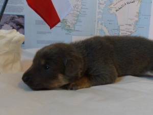 Tasiilaq Female 1 lb 12.7 oz